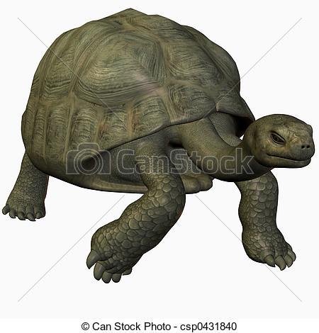 Stock Illustrations of Galapagos Tortoise.