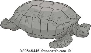 Galapagos tortoise Clipart Royalty Free. 14 galapagos tortoise.