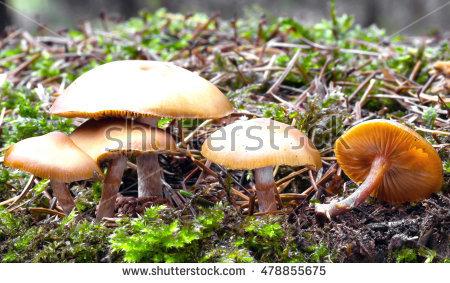 Mushroom Spawn Stock Photos, Royalty.