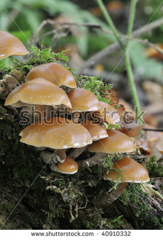 Sheathed woodtuft Stock Photos, Images, & Pictures.