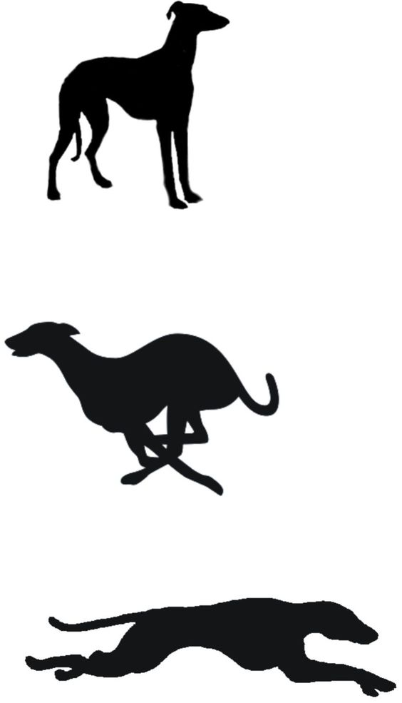 Pin de Michelle O'Donohoe en Italian Greyhound ❤.