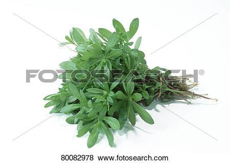 Pictures of DEU, 2002: Sweet Woodruff (Galium odoratum), bundle.