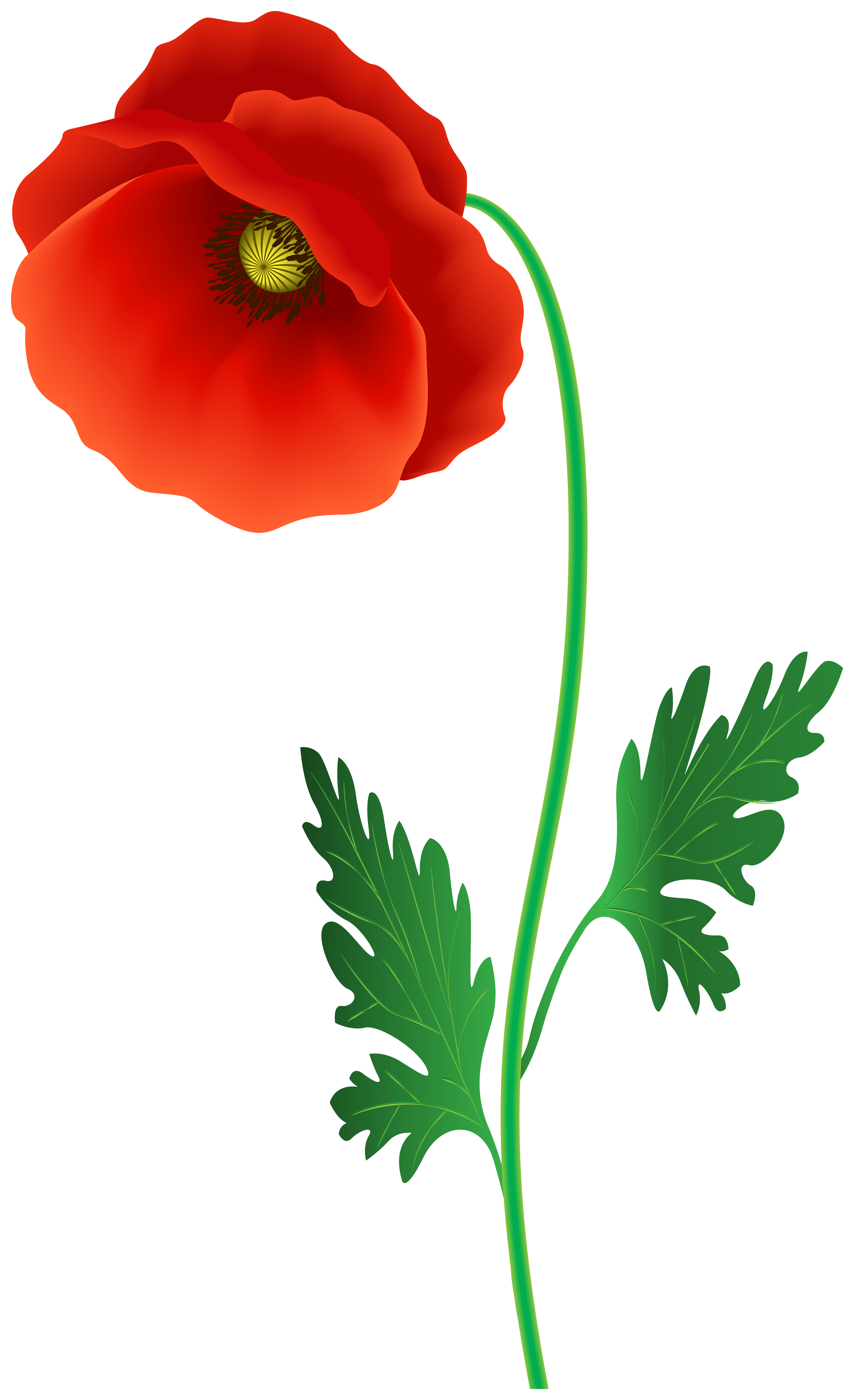 Poppy Flower PNG Clipart Image.