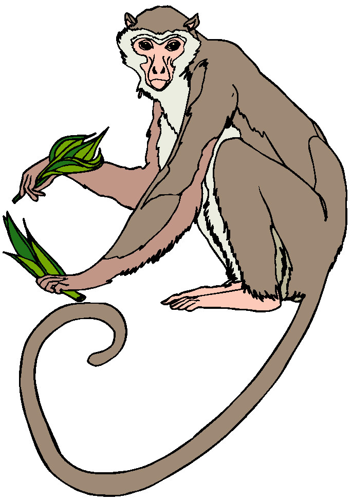 All Cliparts: Monkeys Clipart Gallery2.