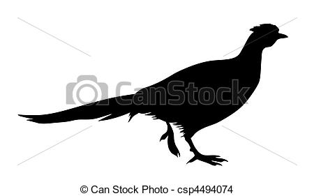 Galliformes Illustrations and Clipart. 62 Galliformes royalty free.