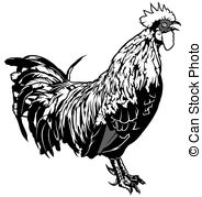 Gallinaceous Vector Clipart Royalty Free. 10 Gallinaceous clip art.