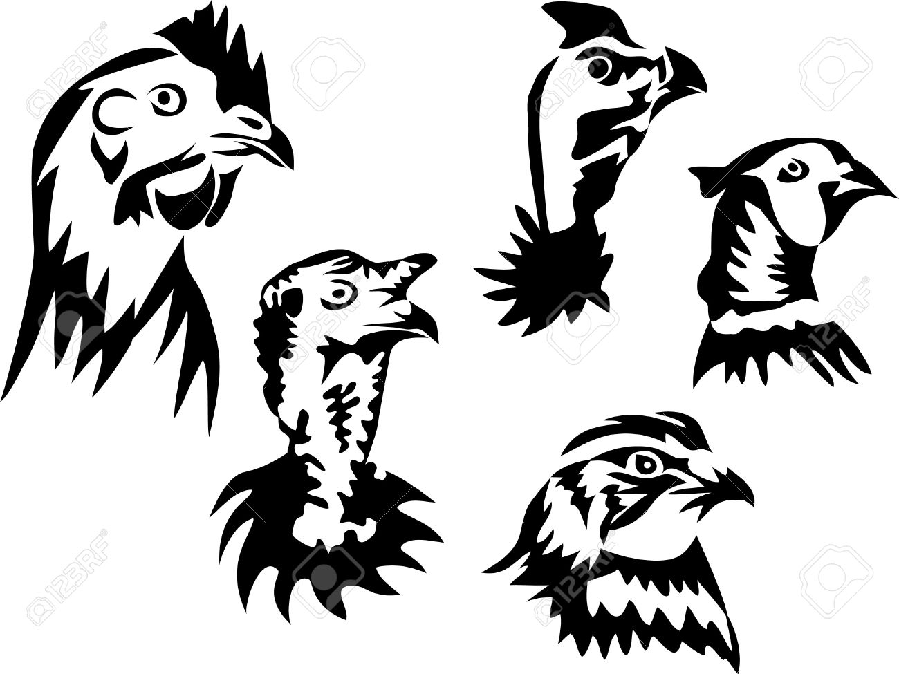 Gallinaceous Poultry.