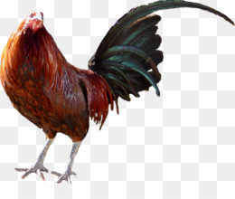 Gallos PNG and Gallos Transparent Clipart Free Download..
