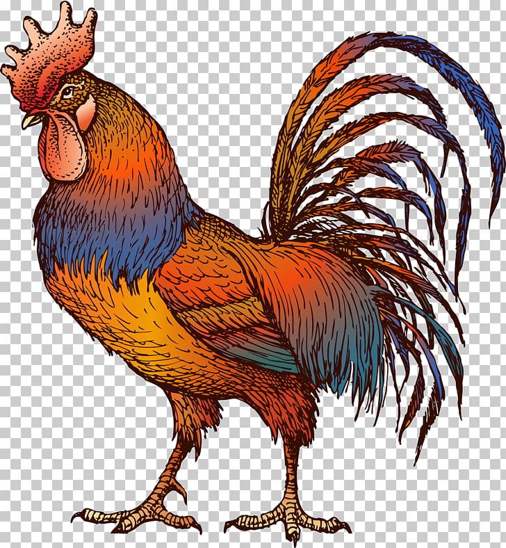 Gallo gallina peleando PNG Clipart.
