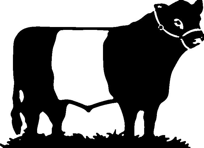 What Makes Belted Galloway So Good.