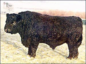 Cow Clip Art Download.