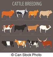 Belted galloway Clipart Vector and Illustration. 10 Belted.