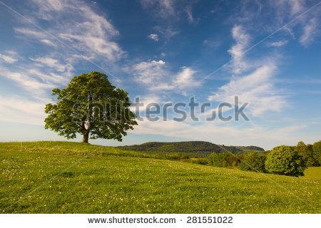 Gallow Tree Stock Photos, Royalty.