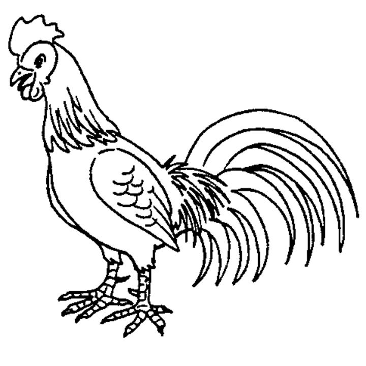 Ayam clipart 2 » Clipart Station.