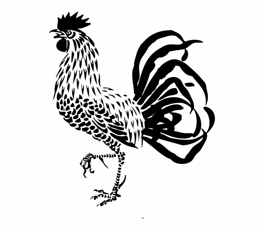 Ayam Jago Ayam Jantan Unggas Pertanian Ayam Bujang.