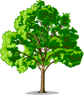 Png Pohon Clipart Collection #3438.