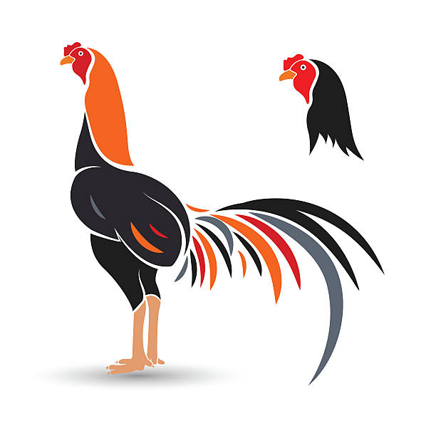 Fighting Roosters Cartoon Clip Art, Vector Images & Illustrations.