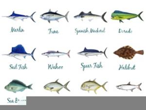 Saltwater Gamefish Clipart.