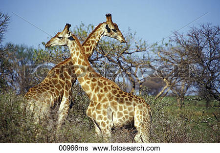 Stock Images of Spioenkop Game Reserve, drive game park, Kwazulu.