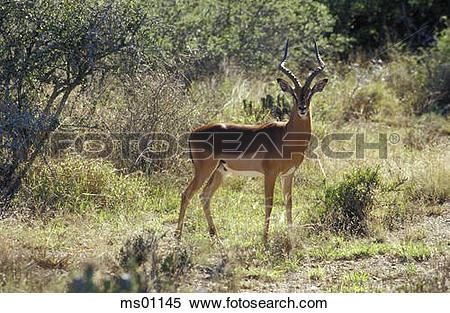 Stock Image of Kwandwe Private Game Reserve, Eastern Cape, Kwandwe.