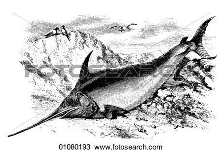 Drawing of Flora & Fauna.