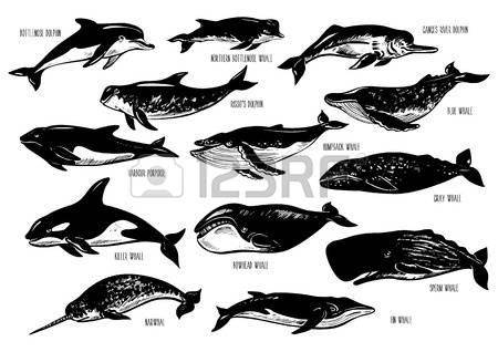 81 The Ganges Stock Vector Illustration And Royalty Free The.