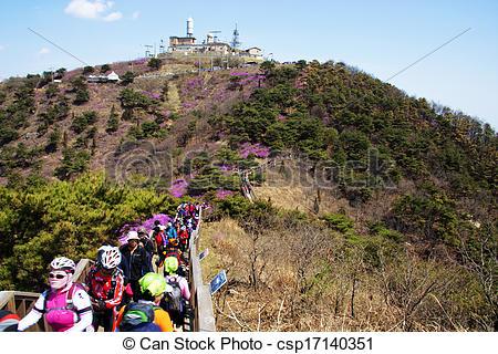 Pictures of Beautiful Azalea Festival in South Korea, Ganghwa.