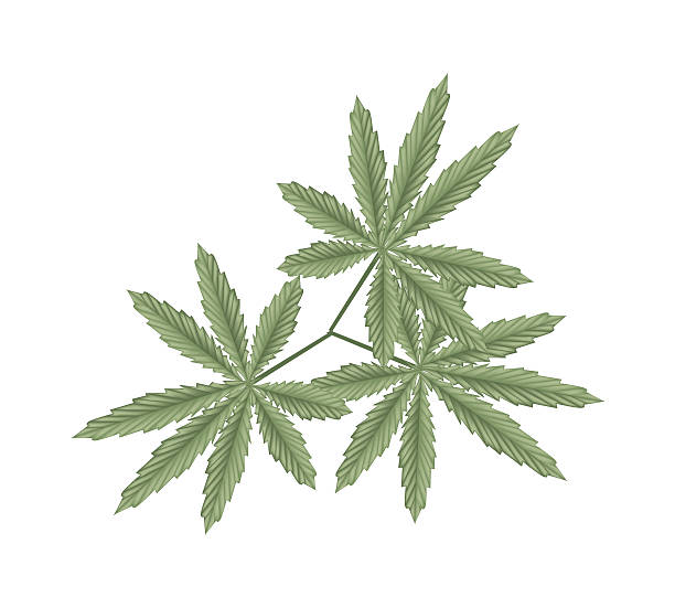 Ganja Clip Art Clip Art, Vector Images & Illustrations.