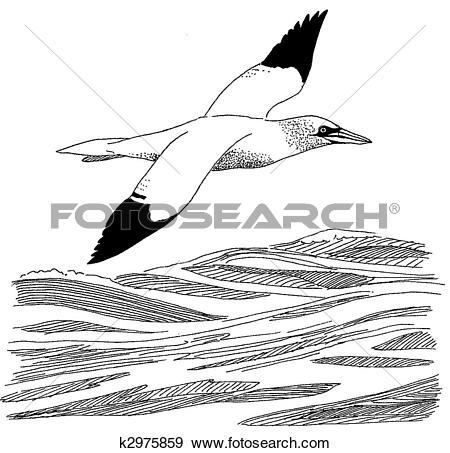 Stock Illustration of Northern Gannet k2975859.