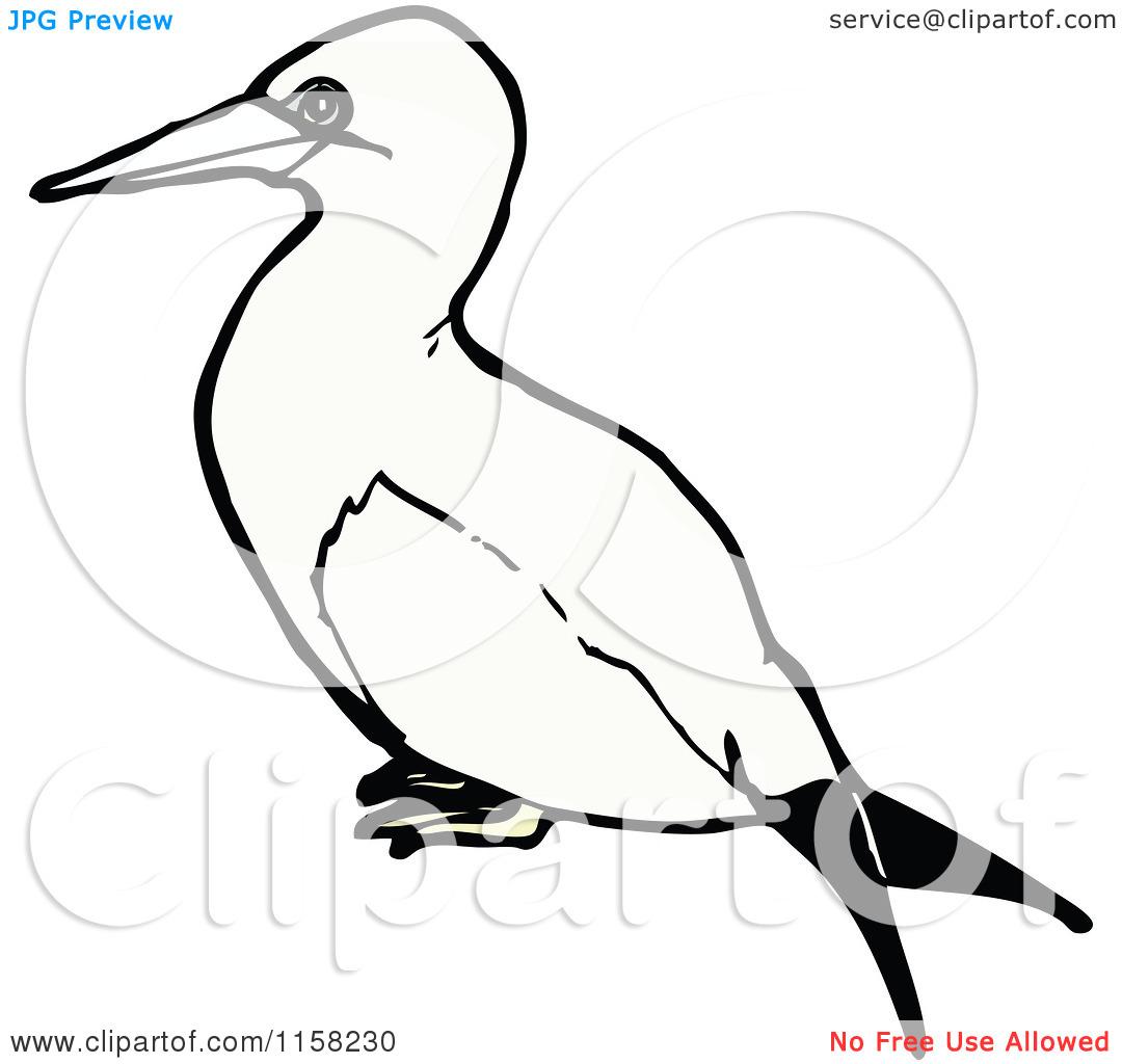 Cartoon of a Gannet Bird.