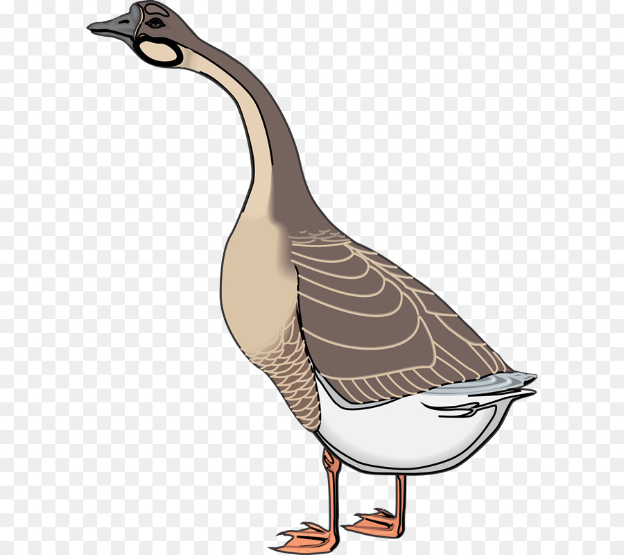 Animal clipart ganso clipart images gallery for free.