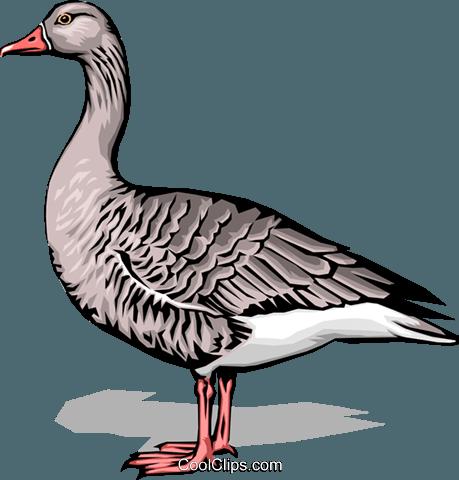 鹅免版税矢量剪贴画插图.