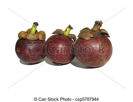 Stock Photo of Garcinia mangostana.