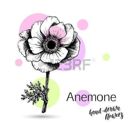 2,249 Anemone Stock Vector Illustration And Royalty Free Anemone.