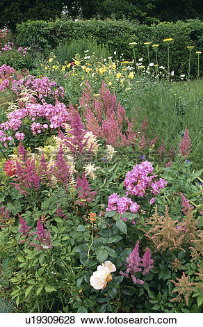 Pictures of Pink phlox and astilbe in flowering borders in country.