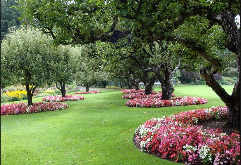 Garden Background Png.