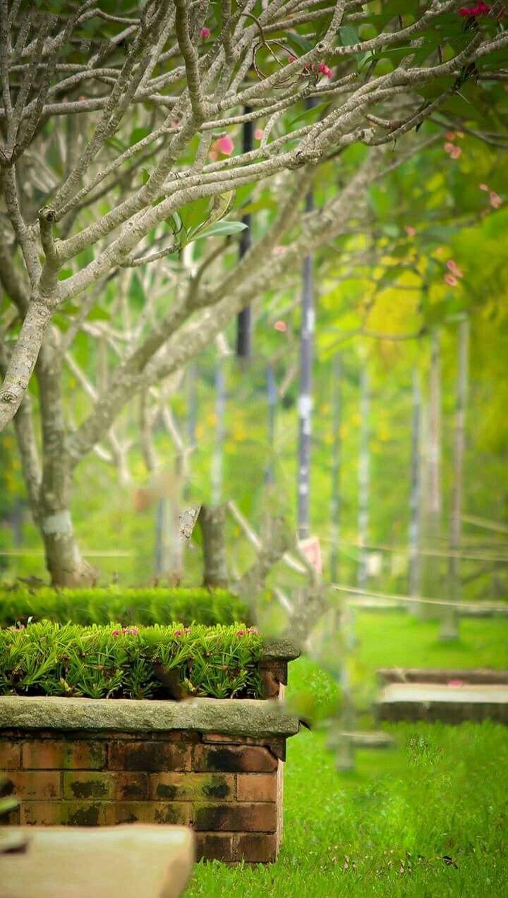 Photoshoot in background garden.