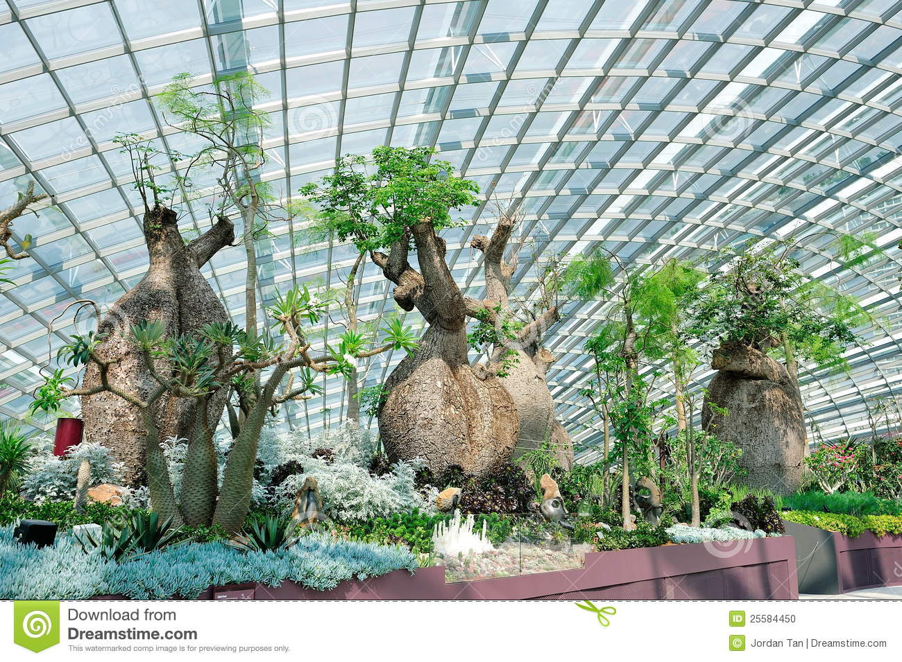 Baobab Tree At Gardens By The Bay Flower Dome Stock Photography.