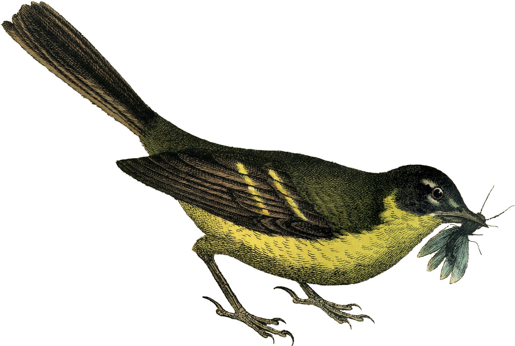 Garden Bird Clipart.