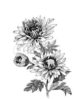 sketches, Chrysanthemum, tattoo.