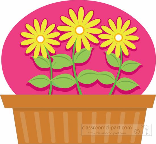 Gardening : chrysanthemum.