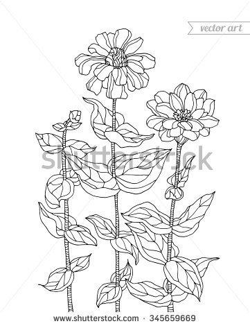 bohemian garden chrysanthemum clipart - Chrysanthemum Book Coloring Pages