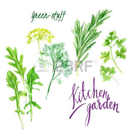 477 Cilantro Cliparts, Stock Vector And Royalty Free Cilantro.