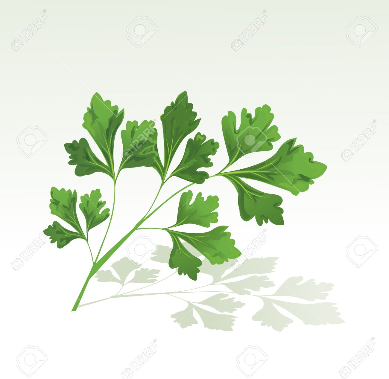 524 Cilantro Cliparts, Stock Vector And Royalty Free Cilantro.