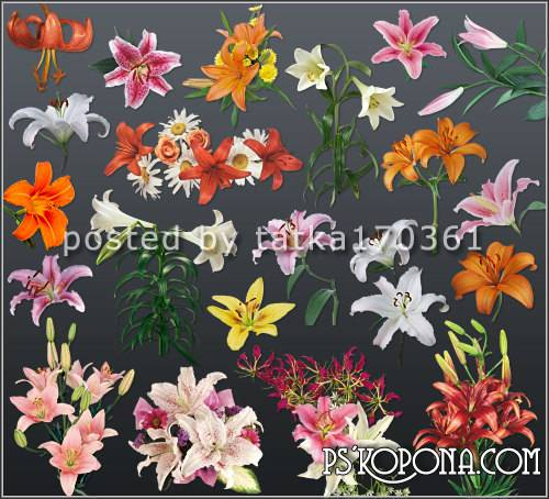 Flower clipart for Photoshop.