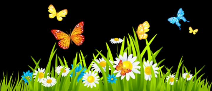 Garden Star Seeds And Flowers For Every Gardener20 PNG Flower.