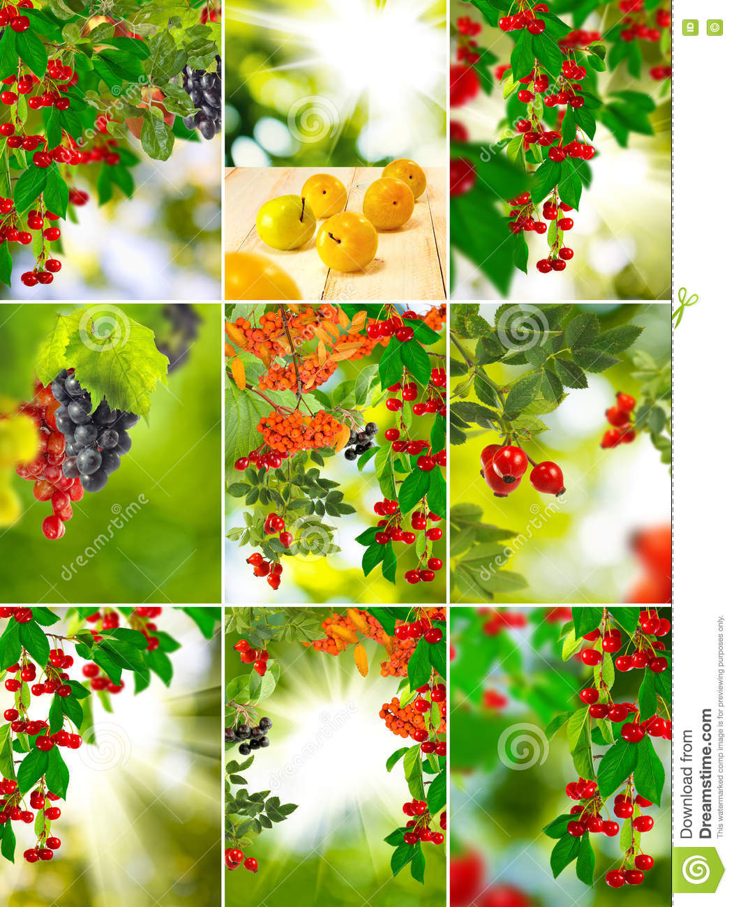 Image Of Fruit And Flowers In The Garden Close.