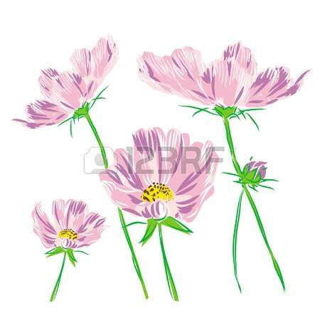 1,774 Cosmos Flower Cliparts, Stock Vector And Royalty Free Cosmos.