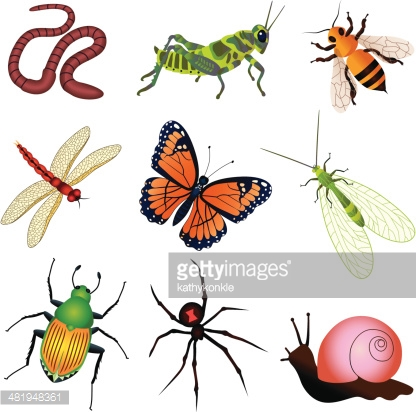 Garden Insects And Creatures Vector Art.