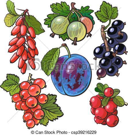 Vector Illustration of Garden berries.